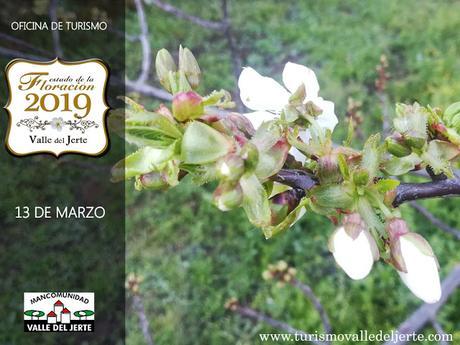 Estado de la Floración actualizado a fecha 13 de marzo de 2019:
