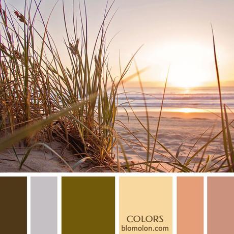 Variedad En Color 13 Paletas