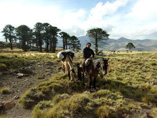 Agentes sanitarios a caballo, por los puestos cordilleranos
