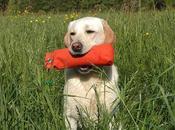 Cómo enseñar nuestro perro rastrear objetos