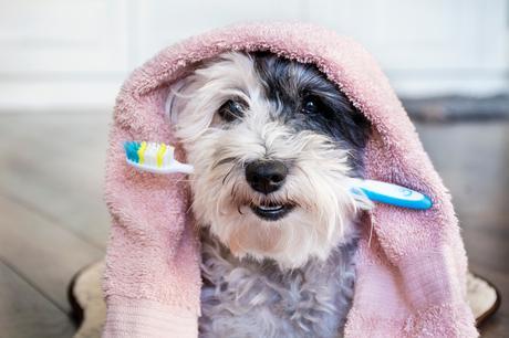 Cuida la salud dental de tu mascota