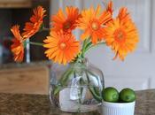 Conoce cuáles plantas ayudan limpiar aire hogar.