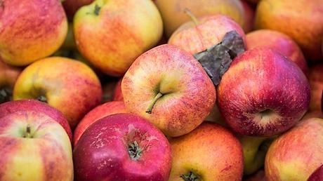 Los manzanos se están muriendo en E.E.U.U.