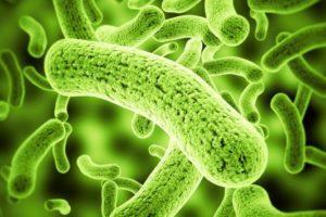 Como eliminar parasitos intestinales rápidamente
