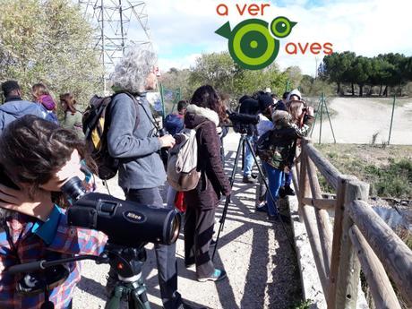 Pájaro moscón en el Manzanares, andarríos chico en Alcorcón y las tres palomas en el Retiro