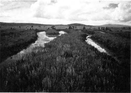 cañahua en campos de cutlivo elevados en Sangachi Huatta