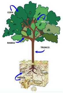 Partes del Árbol