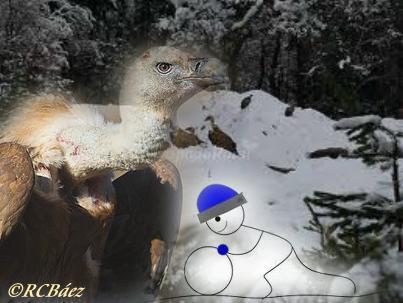 rcbaez_los-buitres-la-nieve-y-la-mentira.JPG