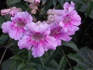 Consejos varios de jardineria para tu casa paperblog - Consejos de jardineria ...