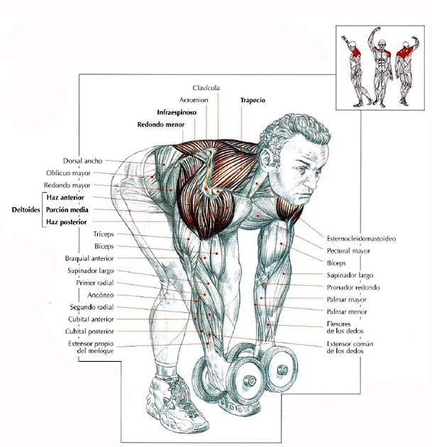 Descargar Guia De Movimientos De Musculacion Pdf Gratis