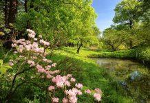 Vivir cerca de un bosque mantiene tu amígdala más saludable