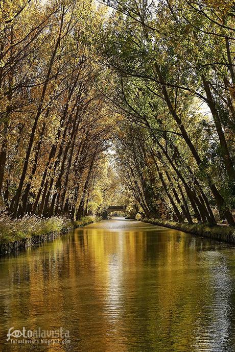 Desde el río, reflejos dorados - Fotografía artística
