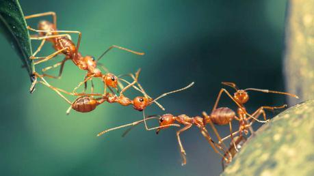 ¿Por qué aparecen las hormigas en primavera?