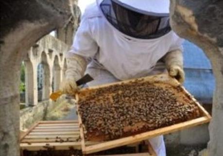 """""""En la ciudad (París), las temperaturas más cálidas, la diversidad de plantaciones, los métodos de cultivo sin fertilizantes y pesticidas, la proliferación de espacios verdes, las plantaciones en terrazas, los alféizares de las ventanas y los patios encantan a las abejas"""", relata la página de Notre Dame."""
