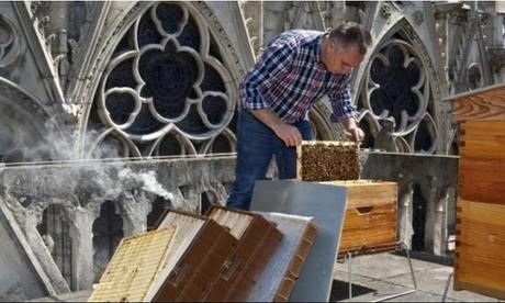Incendio en París  ¿Qué pasó con las 150.000 abejas que vivían en el tejado de Notre Dame?