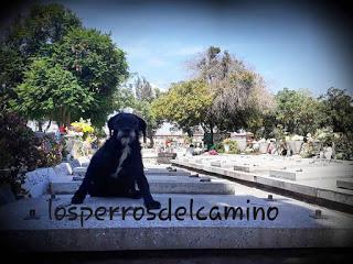 Capitán y Mona del cementerio metropolitano