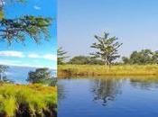 Peroles, Ríoverde: Donde vive milenario árbol