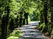 Conoce Ribeira Sacra. rutas imprescindibles para conocerla