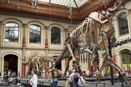 museum_fur_naturkunde_berlin ▷ 15 Mejores Museos de Berlín