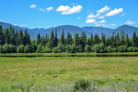 Meadow-near-the-Pole-Bridge-Area-in-Glacier-National-Park-Montana.jpg.optimal ▷ Ideas del itinerario del Parque Nacional Glacier de 1 a 5 días