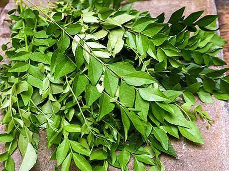 comprar hojas de curry