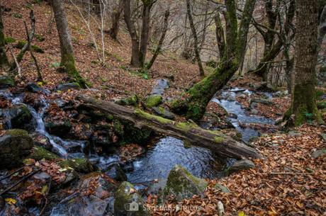 El Bosque Encantado de Carlac, quizás la ruta senderista más bonita del Valle de Arán