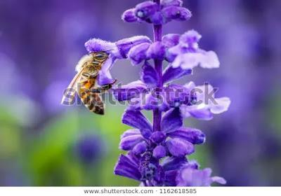 Buscadores de néctar