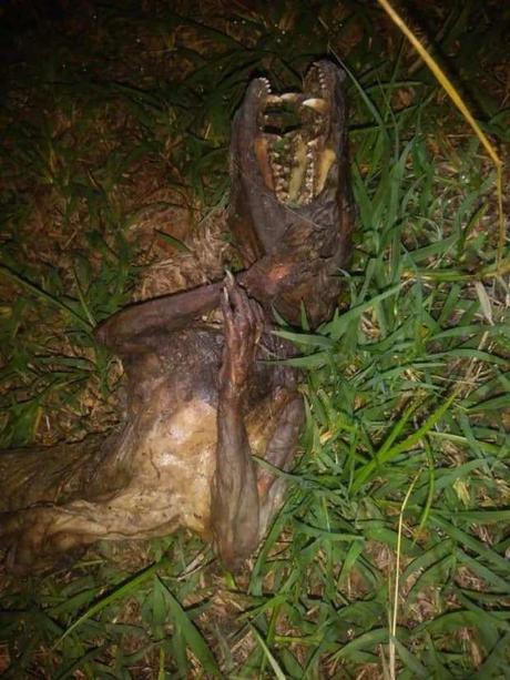Galería: Encuentran extraño animal en la Huasteca Potosina