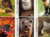 Colección ANIMALES IBÉRICOS: Oferta Pre-Publicación