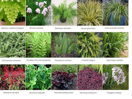 Especies del jardín de San Vicente del Raspeig