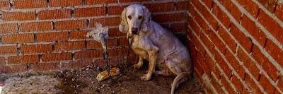 La lacra del maltrato animal.