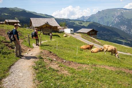 Alpiglen.jpg.optimal ▷ Cómo caminar por el sendero Eiger en el Oberland bernés, Suiza