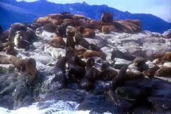 La sorprendente fauna fueguina incluye animales exóticos introducidos por el hombre.