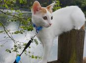 Tener gato primera vez: cosas hemos aprendido