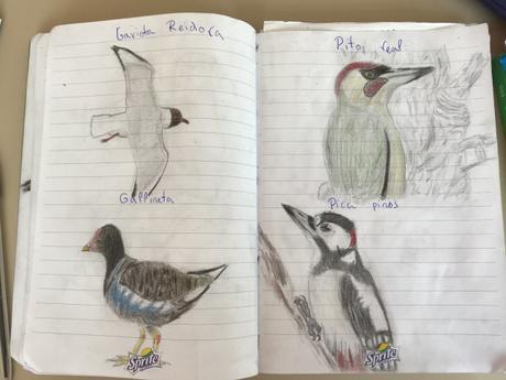 Casi cinco mil escolares ven 125 especies de aves en 150 parques