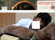Corea abundan clínicas veterinarias ofrecen sesiones acupuntura para animales