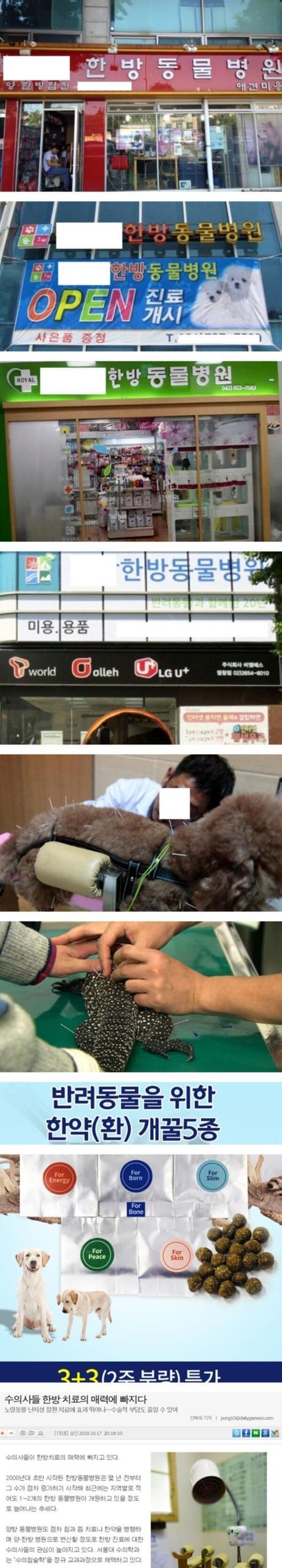 En Corea abundan las clínicas veterinarias que ofrecen sesiones de acupuntura para animales
