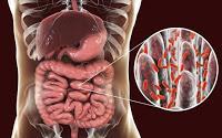 Los microbios intestinales  eliminan los virus que dañan el cerebro