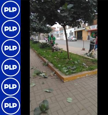 CAMPAÑA DE MANTENIMIENTO DE ÁREAS VERDES, PARQUES Y JARDINES…