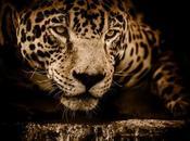 Memorias Jaguar Águila reflexión personal audiolibro