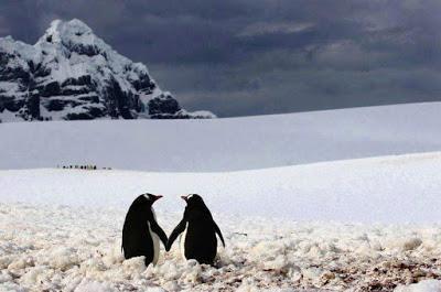 Pingüinos y Feng Shui