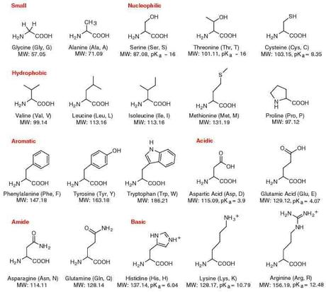 cuales son los aminoácidos esenciales