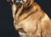 Científicos explican porqué mirada perros irresistible