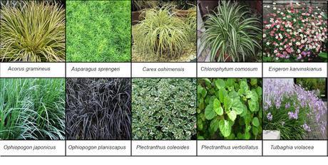 Especies del jardín vertical HM Tropical