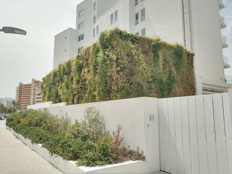 Estado actual del jardín vertical del hotel HM Tropical
