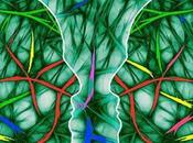 Neuronas espejo: relacionan empatía