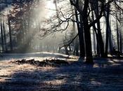bosque Drostán
