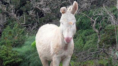Un burro de goma