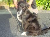 JARA, preciosa cachorra meses Border collie) perrera, Cumple próxima semana. Guipúzcoa