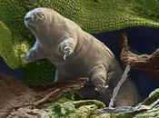 Tardígrado, animal resistente mundo, rumbo espacio